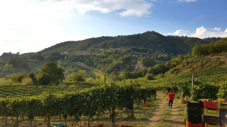 """""""I viaggi di Ferrante"""", per capire di più dei vini e della enologia dei territori con Ferrante di Somma"""